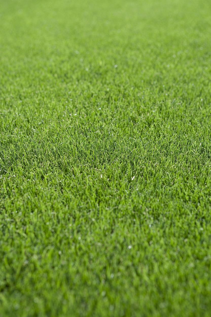 ArizonaRyegrass